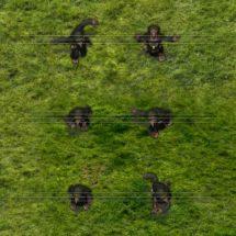 Moorland Goblin Cultist