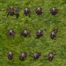 Moorland Goblin Warrior